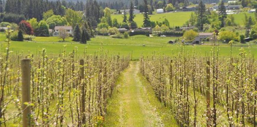 Lot 7 Springfield Road, Coldstream, British Columbia, Canada V1B3E5, Register to View ,For Sale,Springfield,10217274