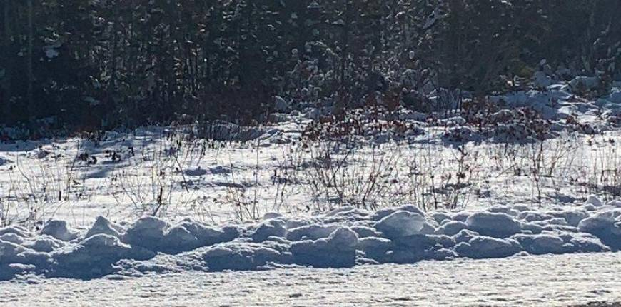 Acreage Highway 103, Beaver Dam, Nova Scotia, Canada B0T1W0, Register to View ,For Sale,202102356