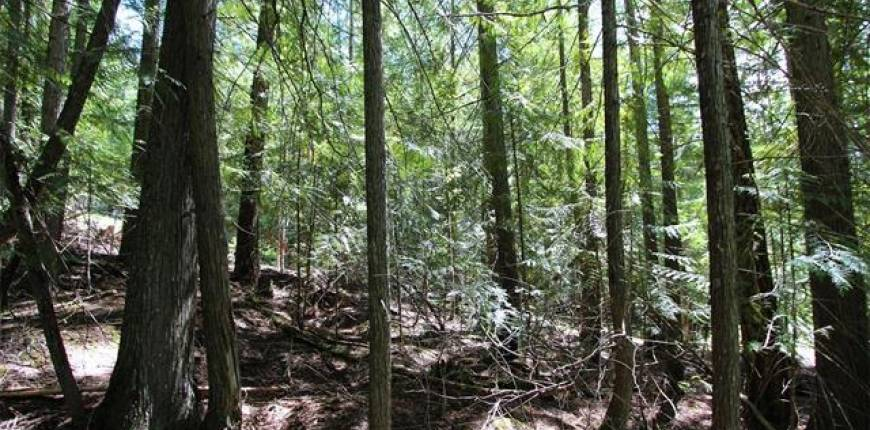 Lot 212 Estate Place, Anglemont, British Columbia, Canada V0E1A0, Register to View ,For Sale,Estate,10233839